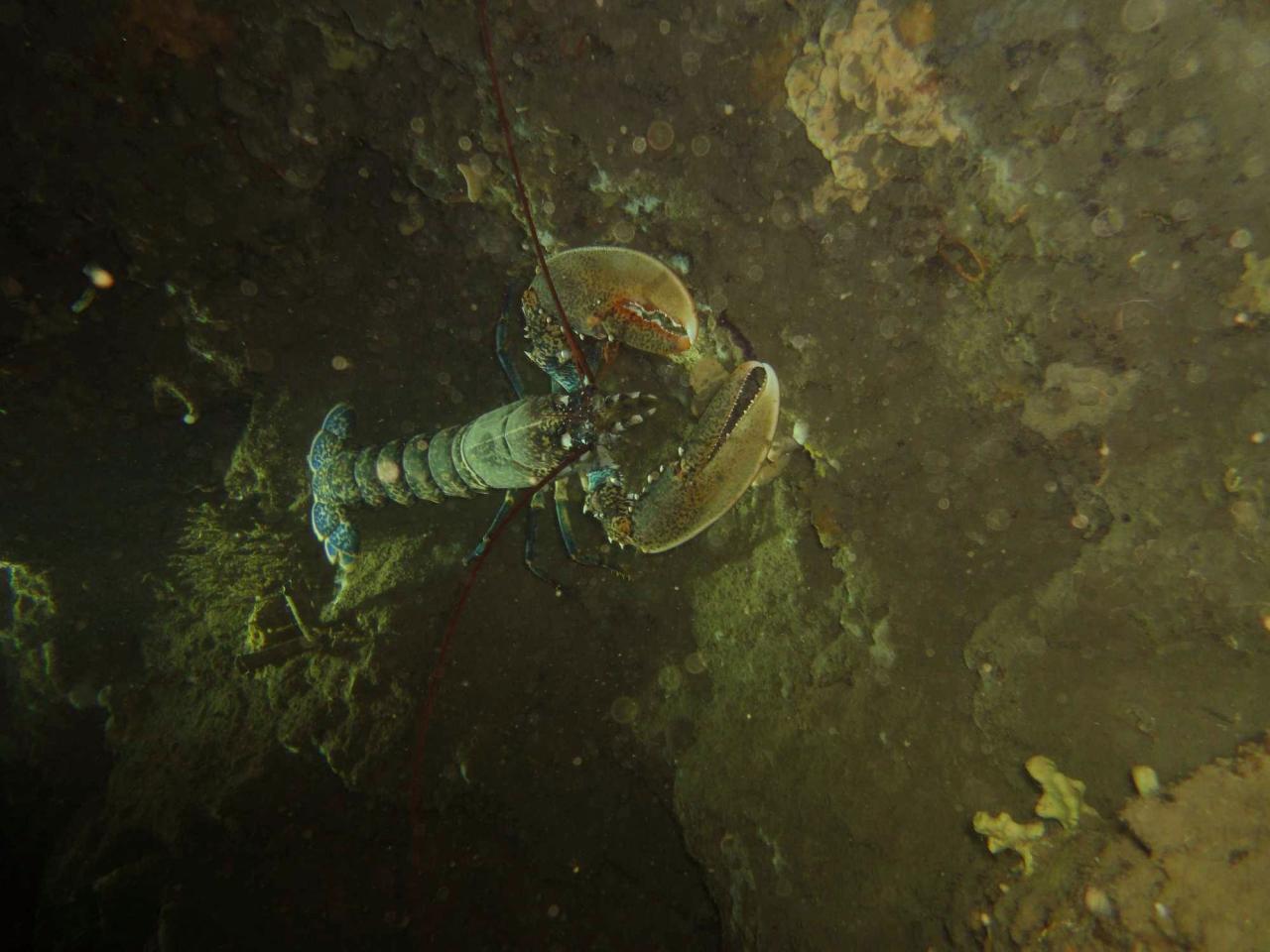 Sabbe plongée Escala mai 2014 (27)