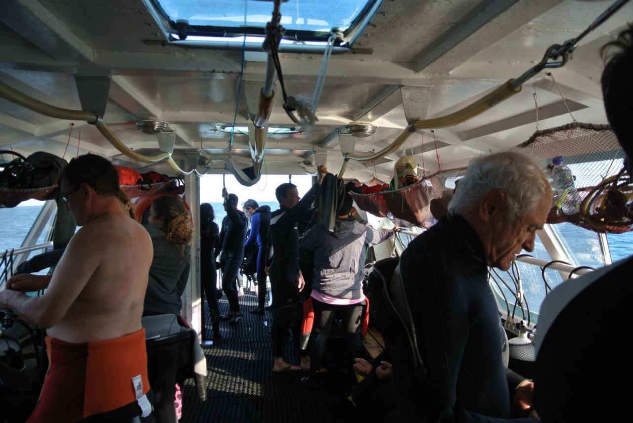 SABBE plongée Hendaye 201410 (17)