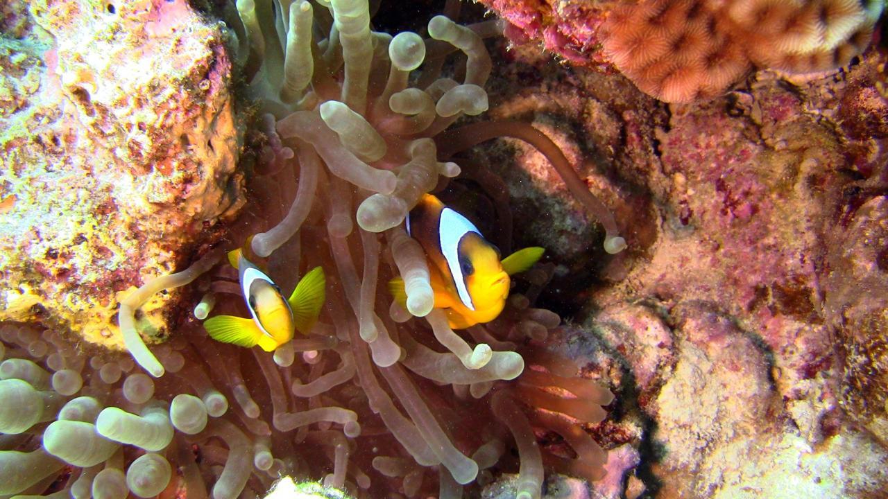 Sabbe47_201210_MF_Hurghada (6)