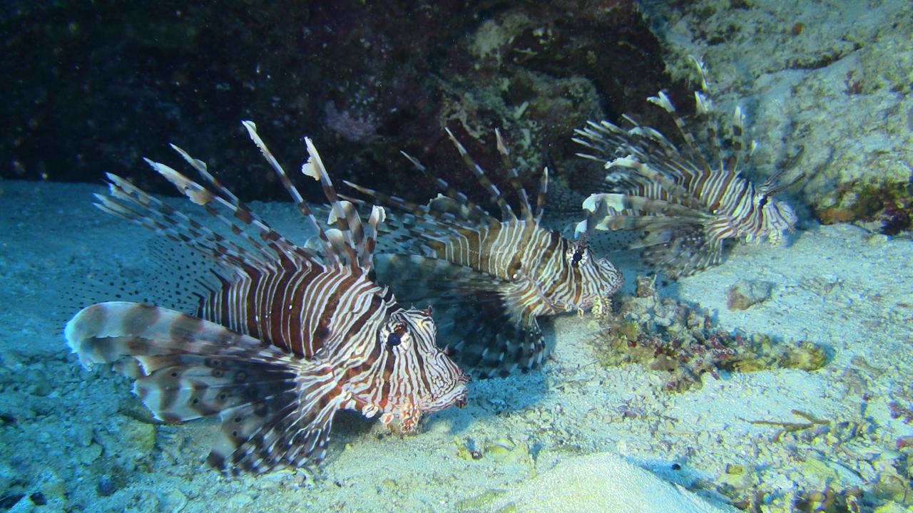 Sabbe47_201210_MF_Hurghada (8)